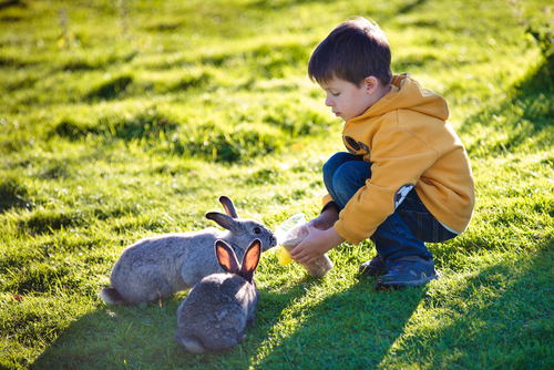 Top 8 Family Camping Spots for Easter